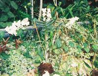 Utopia Park orchids