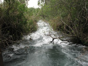 Image of Tel Dan stream