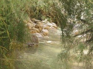 Image of En Gedi-stream